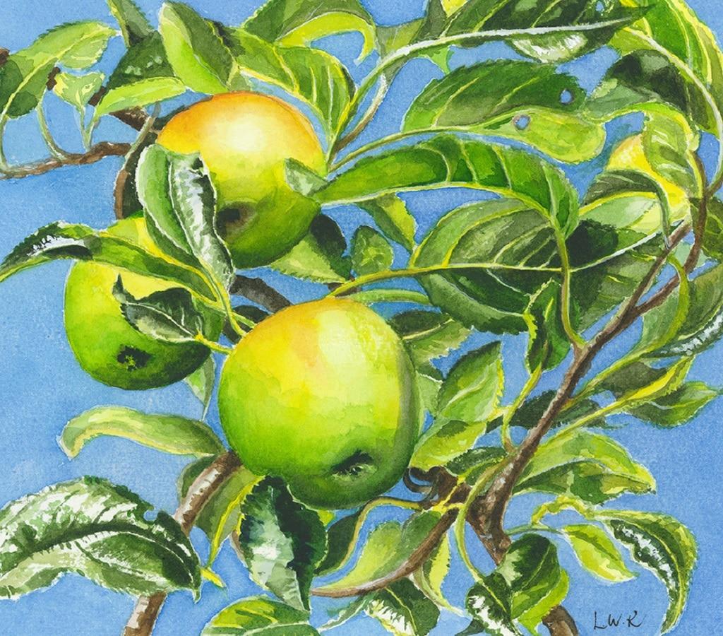 Odiham Apples