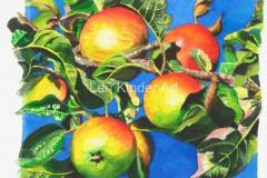 Cheshire Apples