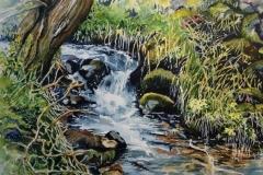 Derbyshire brook