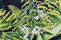 Wild Garlic and Ferns